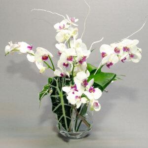 לה ולי פרחים - סידורים - סידור סחלב מדהים