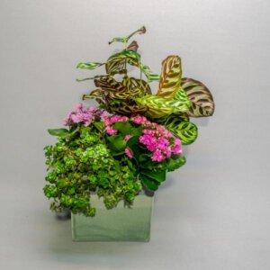 קוקטייל פרפר מהודר - לה ולי פרחים