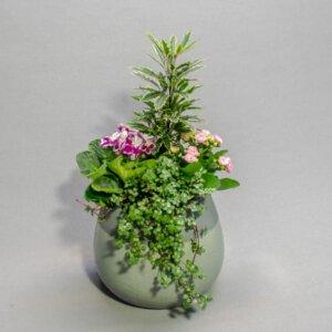 סיגליות שלי - לה ולי פרחים
