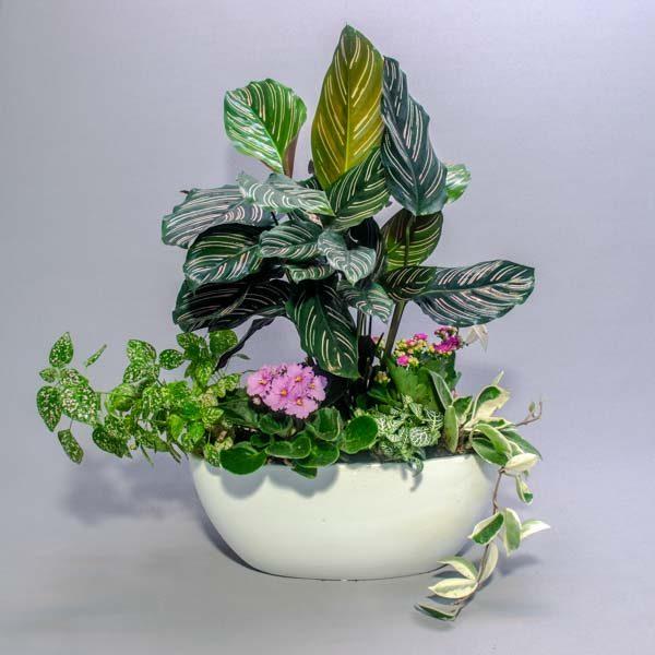 קוקטייל סירה- לה ולי פרחים