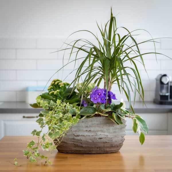 קוקטייל סירה ענק - לה ולי פרחים