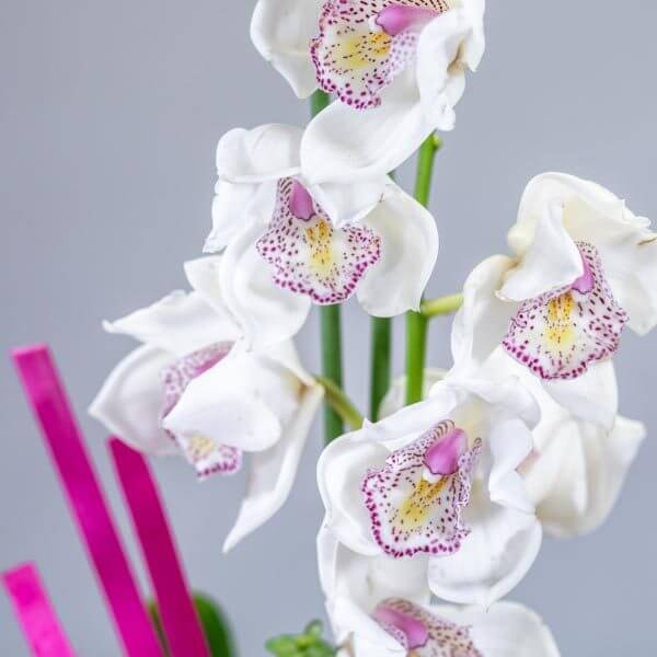 סידור סחלבים חגיגי - לה ולי פרחים