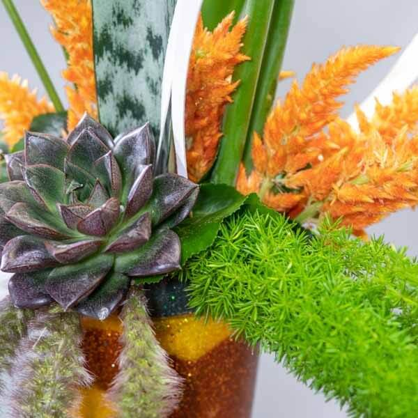 סידור פיסטוק הולנדי - לה ולי פרחים