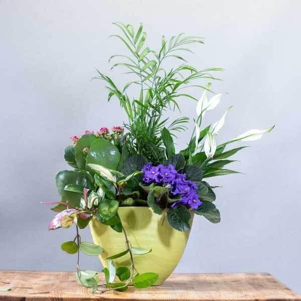 סידור קוקטייל יוקרתי - לה ולי פרחים בחיפה