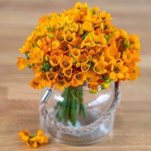 לה ולי פרחים - זר דוביום (ללא מים) - משלוחי פרחים בחיפה