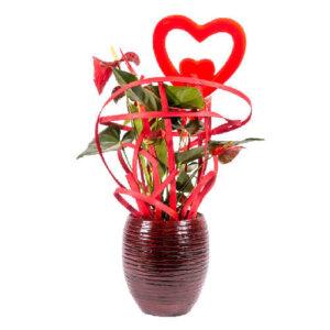 לה ולי פרחים - מעגל אהבה