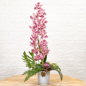 לה ולי פרחים - סידור סחלב צימבידיום