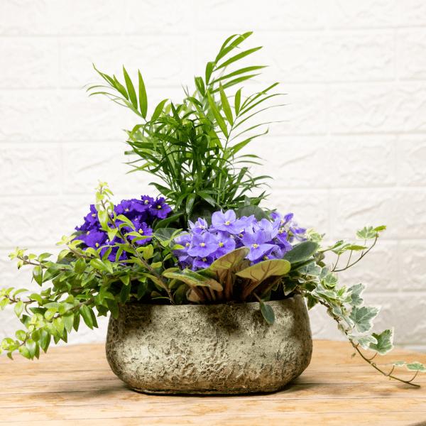 קוקטייל סיגליות לשולחן החג - לה ולי פרחים