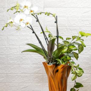 לה ולי פרחים- קוקטייל סחלב ענק