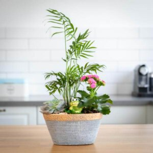 קוקטייל סירה - לה ולי פרחים