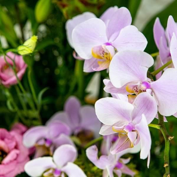 לה ולי פרחים - סידור טרופי ענק קלאסי