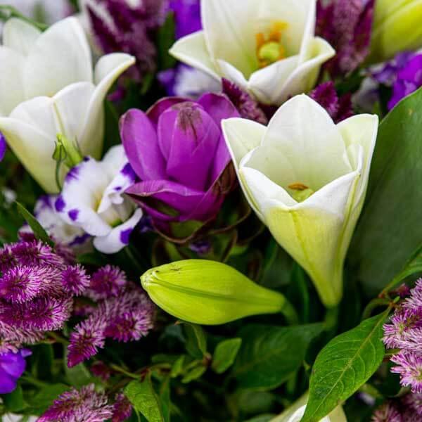 לה ולי פרחים - חלום סגול
