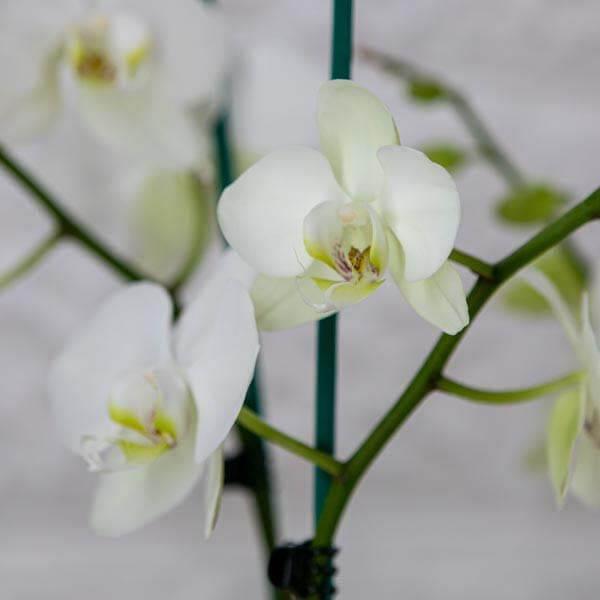 לה ולי פרחים | משלוחי פרחים בחיפה | מתנות בחיפה