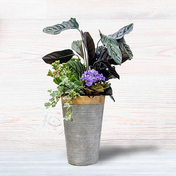 לה ולי פרחים - קוקטייל אורנטה