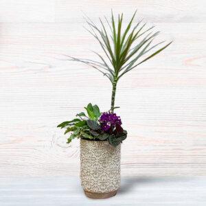 לה ולי פרחים - קוקטייל דרצנה